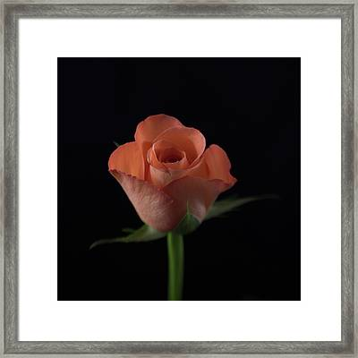 Out Of The Black Framed Print