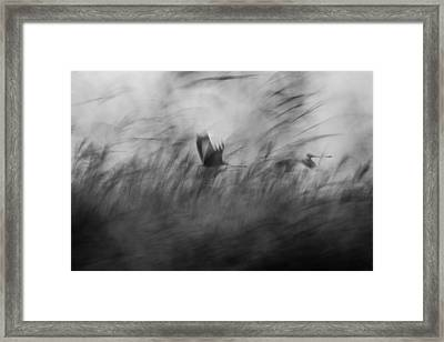 Out Of The Blue Framed Print by Elior Segev