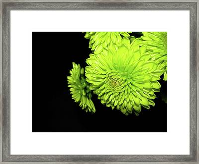 Out Of The Darkness Framed Print by Randy Rosenberger
