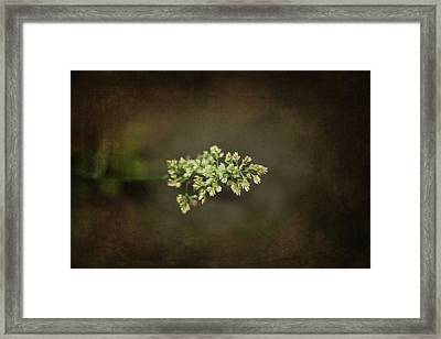 Out Of The Fog Framed Print by Rozalia Toth