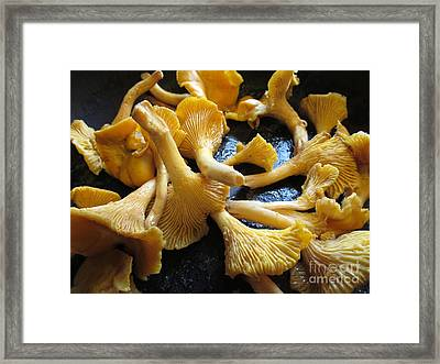 Out Of The Forest And Into The Frying Pan Framed Print by Martin Howard