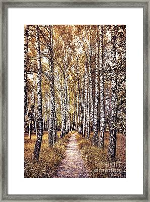 Out Of The Forest And Into The Trees Framed Print