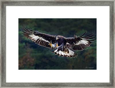 Out Of The Forest Framed Print by CR  Courson