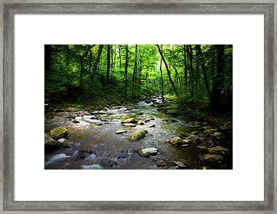 Out Of The Forest Framed Print