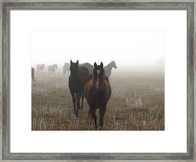 Out Of The Mist Framed Print
