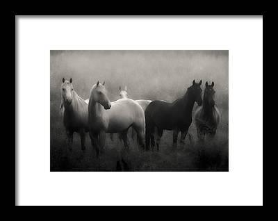 White Horse Framed Prints