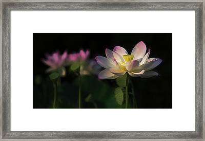 Framed Print featuring the photograph Out Of The Mud by Cindy Lark Hartman
