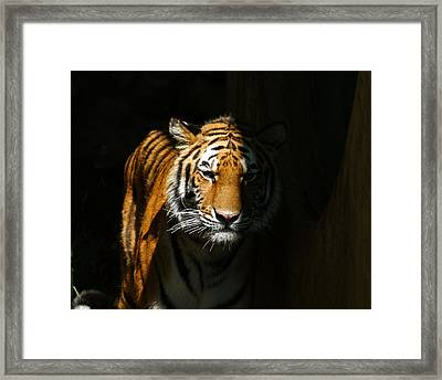 Out Of The Shadows Framed Print by Ernie Echols