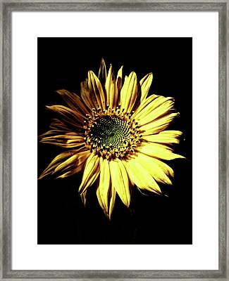 Out Of The Shadows Framed Print