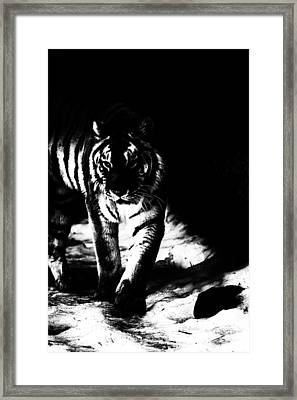Out Of The Shadows Framed Print by Karol Livote