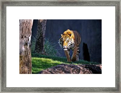 Out Of The Shadows Framed Print by Tom Dowd