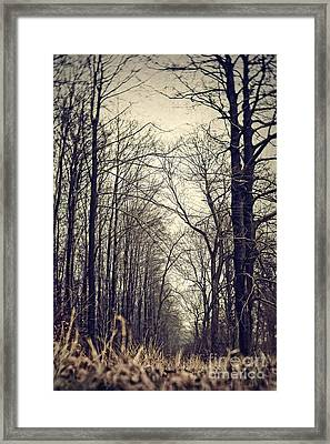 Out Of The Soil - Into The Forest Framed Print