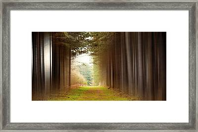 Out Of Woods Framed Print by Svetlana Sewell