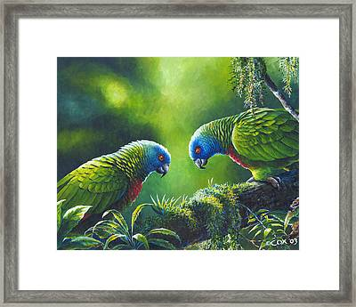 Out On A Limb - St. Lucia Parrots Framed Print by Christopher Cox