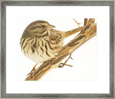 Out On A Limb Framed Print by Richard Oliver
