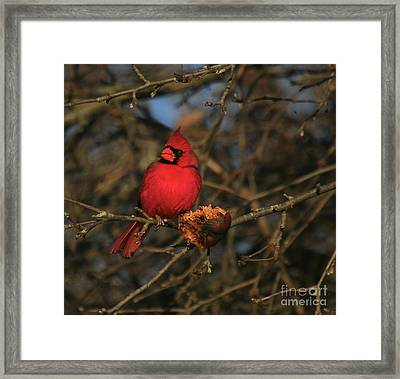 Out On A Limb Framed Print by Robert Pearson