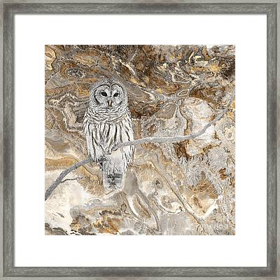 Out On A Limb Framed Print by Sharon K Shubert