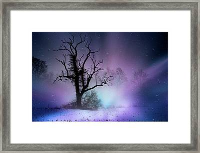 Out On A Limb Framed Print by Trish Tritz