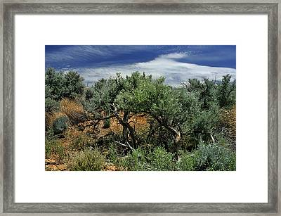 Out On The Mesa 3 Framed Print
