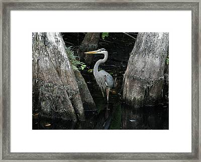 Out Standing In The Swamp Framed Print