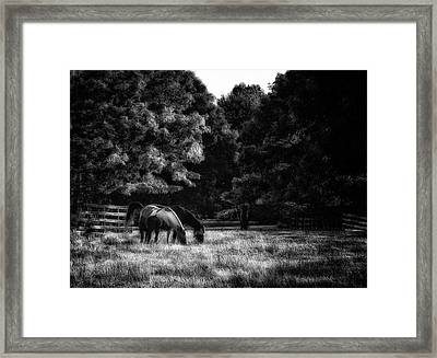 Out To Pasture Bw Framed Print by Mark Fuller