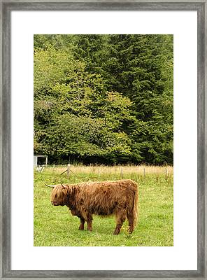 Framed Print featuring the photograph Out To Pasture by Christi Kraft