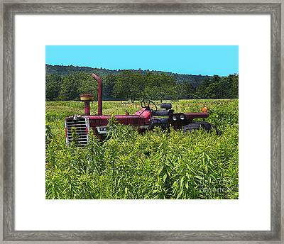 Out To Pasture Framed Print by Diane E Berry