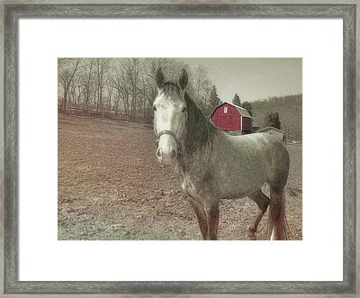 Out To Pasture Framed Print by JAMART Photography
