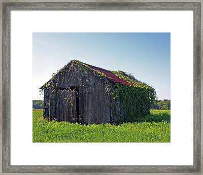 Out To Pasture Framed Print by Joy Tudor