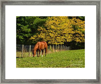 Out To Pasture Framed Print by Kathy Jennings