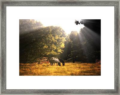 Out To Pasture Framed Print by Mark Fuller
