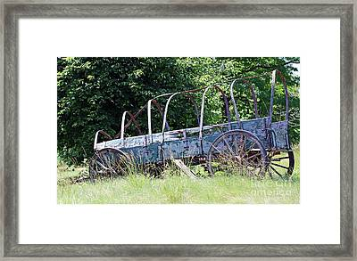 Out To Pasture Framed Print by Steve Gass