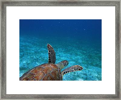 Out To Sea Framed Print by Kimberly Mohlenhoff