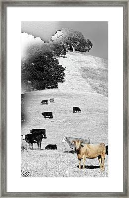 Out West Framed Print by Monroe Snook