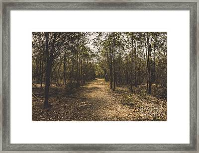Outback Queensland Bush Walking Track Framed Print by Jorgo Photography - Wall Art Gallery