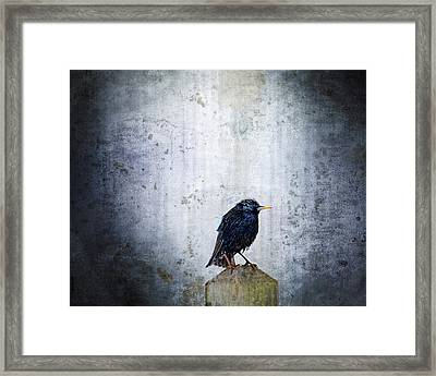 Outcast Framed Print by Moon Stumpp