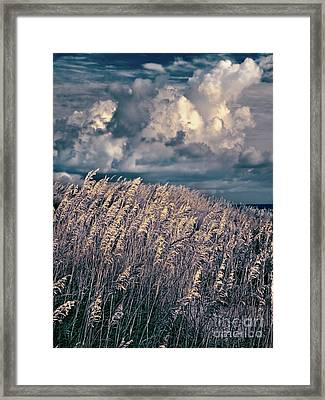Outer Banks - Sea Oats Swaying In A Storm Fx Framed Print by Dan Carmichael
