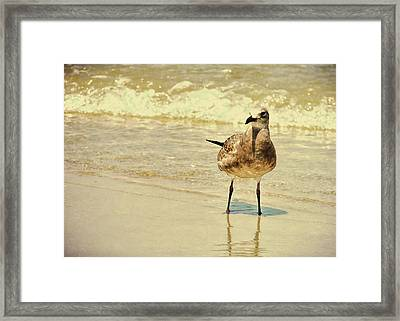 Outerbanks Gull Framed Print by JAMART Photography