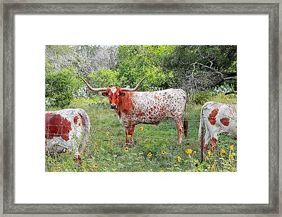 Outflanked Framed Print