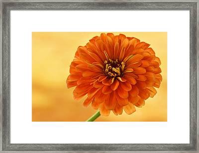 Outrageous Orange Framed Print by Sandy Keeton