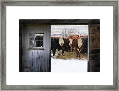 Outside Looking In Framed Print by Lori Deiter