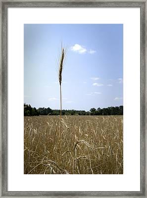 Outstanding In Its Field. Framed Print