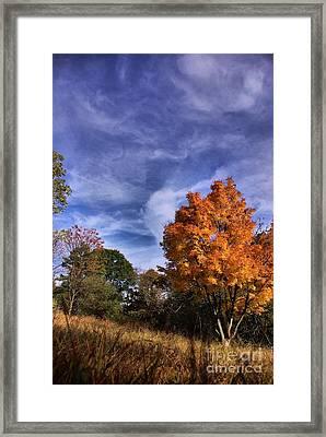 Outstanding In My Field...lol Framed Print by John S