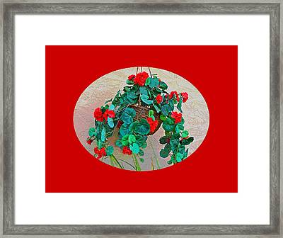 Oval Hanging Geraniums With Red Background Framed Print