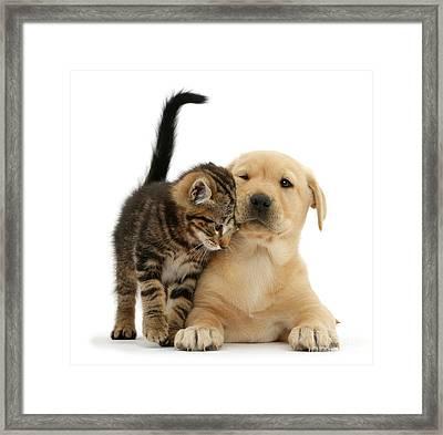 Over Friendly Kitten Framed Print