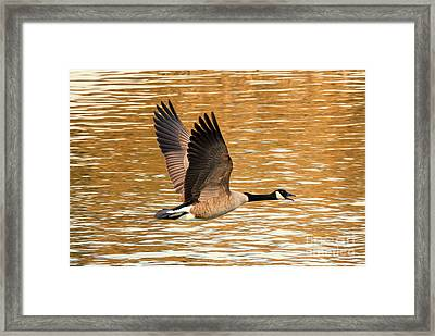 Over Golden Waters Framed Print