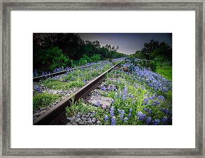 Over Grown Framed Print by Chris Multop