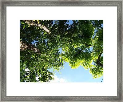 Over Me Framed Print by Laurette Escobar