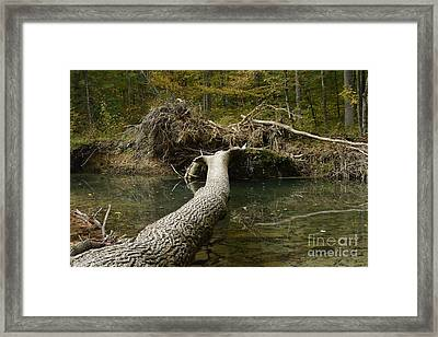 Framed Print featuring the photograph Over On Clover by Randy Bodkins