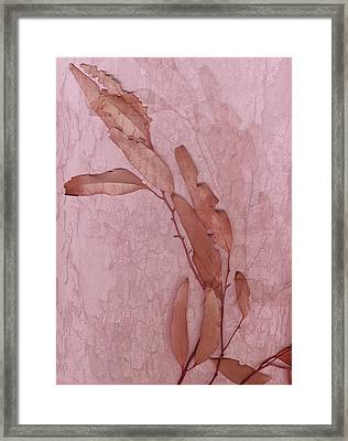 Over Pink Framed Print by Eileen Shahbazian
